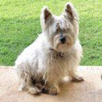 Profile photo of Stogie